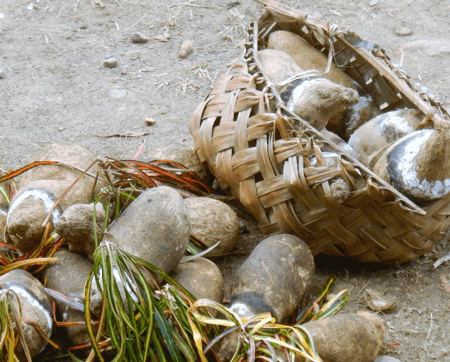 Pacific Shells in a Mesh Bag